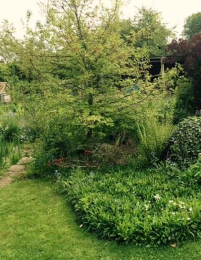 laurel-hill-garden-design-cherry-tree-b1