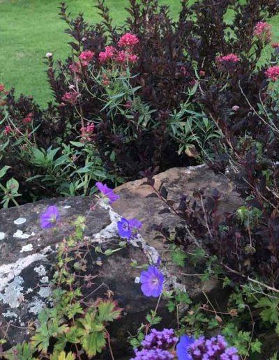 laurel-hill-garden-design-ellens-planting-combo