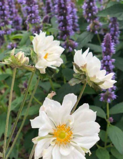 laurel-hill-garden-design-flower-3