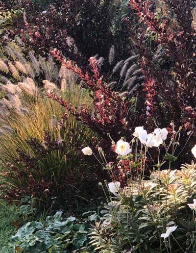 laurel-hill-garden-design-formal-sussex-a5