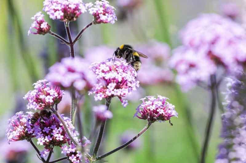 laurel-hill-garden-design-hampton-award-flower-bee