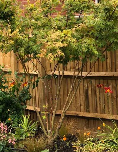 laurel-hill-garden-design-leith-way-acer