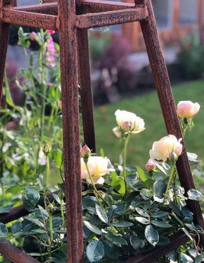 laurel-hill-garden-design-leith-way-rosa-Vanessa-Bell