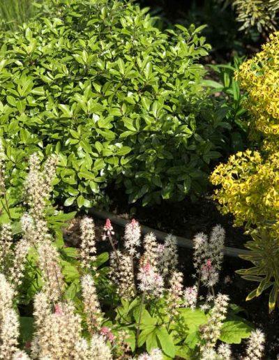 laurel-hill-garden-design-planting-front-of-garage