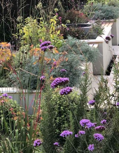 laurel-hill-garden-design-purple-flower