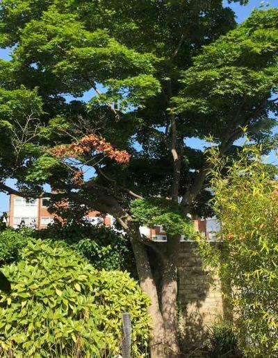 laurel-hill-garden-design-putney-before