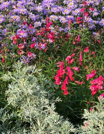 laurel-hill-garden-design-standen-homestead-2