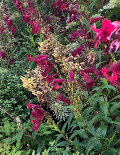 laurel-hill-garden-design-textured-planting-front-of-garage