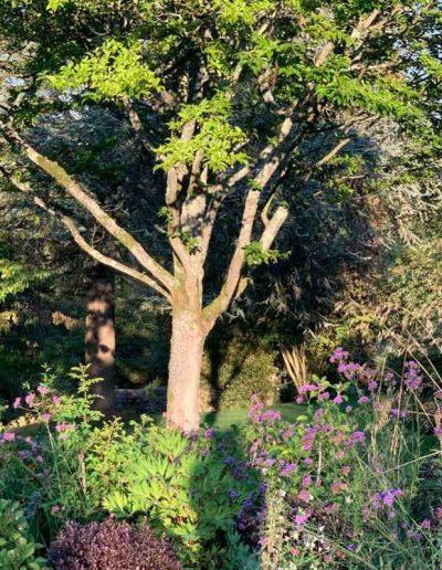 laurel-hill-garden-design-tree