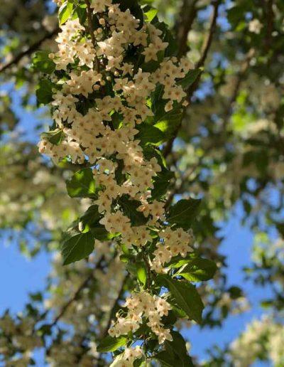 laurel-hill-garden-design-tree-flower