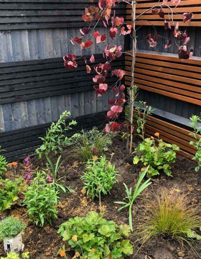 laurel-hill-garden-design-urban-garden-tree-1