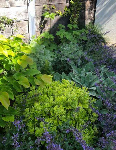 laurel-hill-garden-design-chantry-quarry-planting-update-2