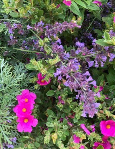 laurel-hill-garden-design-chantry-quarry-planting-update-3