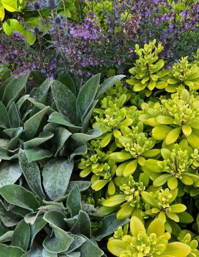 laurel-hill-garden-design-chantry-quarry-planting-update-4
