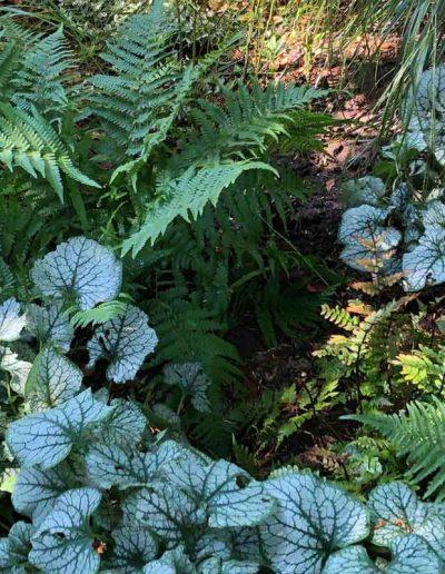 laurel-hill-garden-design-chantry-quarry-planting-update-5