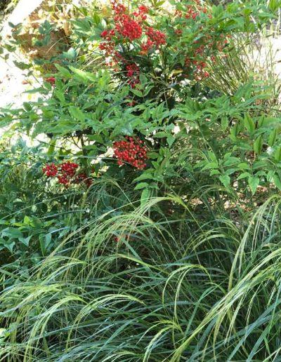 laurel-hill-garden-design-chantry-quarry-planting-update-6