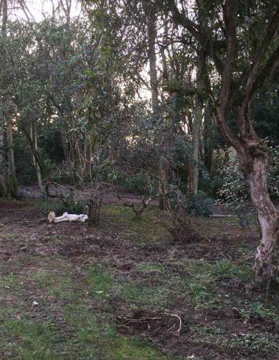 laurel-hill-garden-design-large-country-garden-2