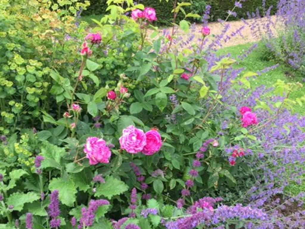 laurel-hill-garden-designs-planting-services