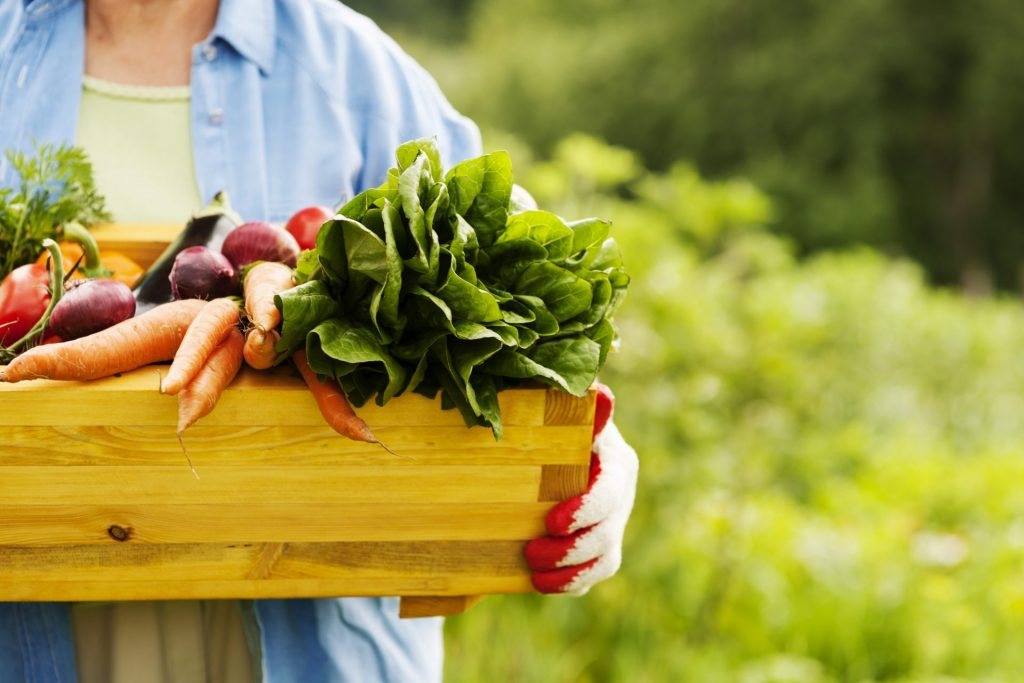 laurel-hill-gardens-senior-woman-holding-box-with-vegetables