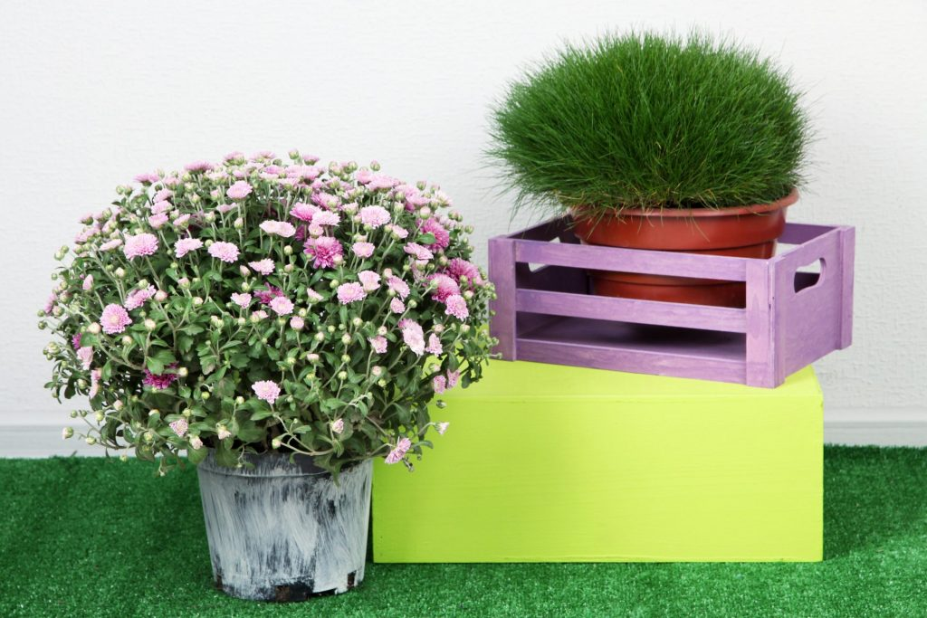 laurel-hill-gardens-flowers-in-pots-with-boxes-on-grass-on-grey-background